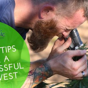 3 Tips On How to Harvest CBD and come to Market 2020